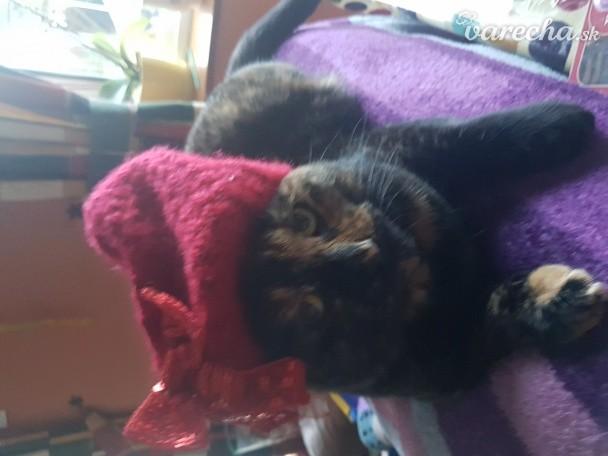 Veľká mačička zblízka fotky Beverly Lynn výstrek